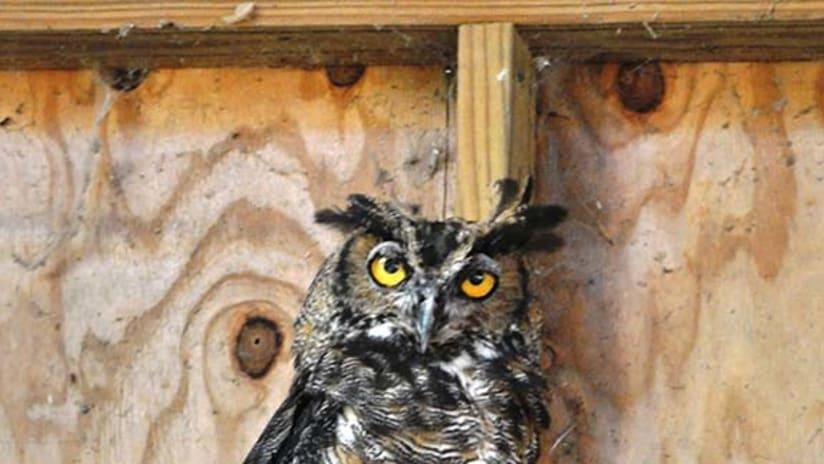 Bubba Owl
